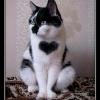 heart002