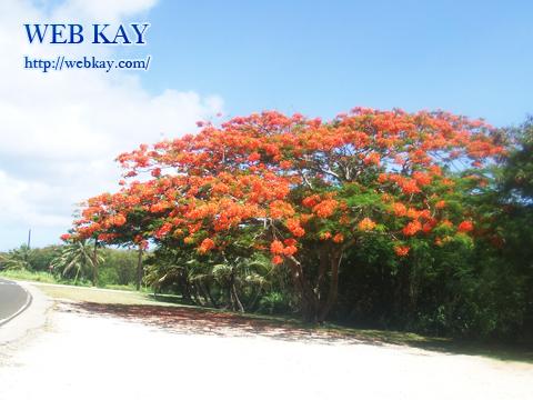 フレームツリーの樹