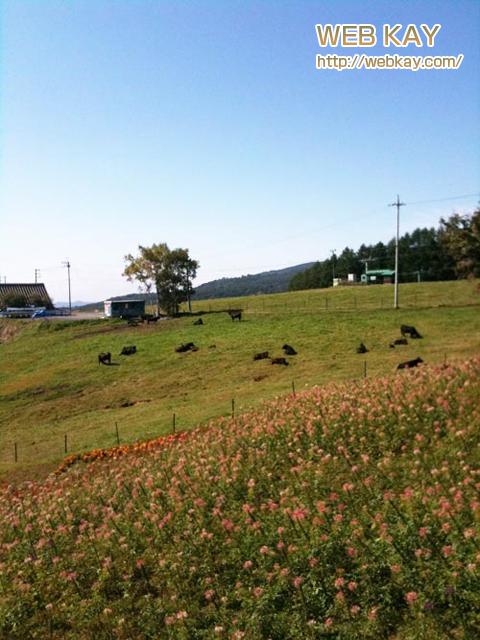 武尊牧場スキー場 牛