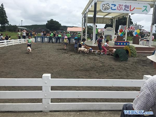 千葉 マザー牧場 こぶた(子豚)のレース