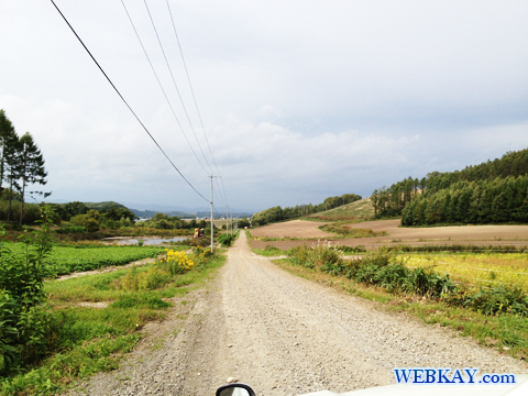 美瑛 びえい 観光 スポット 有名な木 ドライブ