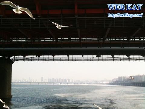 漢江 ハンガン ソウル 遊覧船 観光 ツアー 韓国旅行 かもめ
