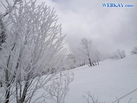 ラ・フォーレ・センター 裏磐梯猫魔スキー場 福島県 スノーボード snowboarding Japan fukushima