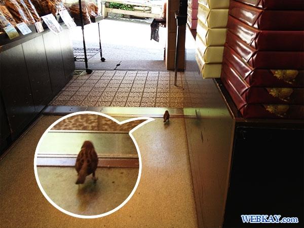 黒ごまソフトクリーム 兼六園 けんろくえん 蓮池門通り れんちもん 食べログ 金沢 Kenroku-en kanazawa icecream