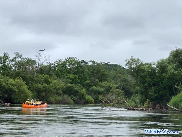 オジロワシ カヌーツアー 釧路湿原 カヌー Kushiro Marsh canoe