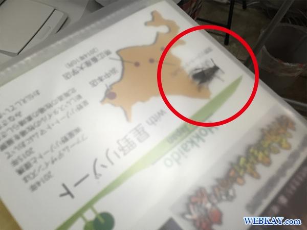 北海道 美瑛 黒スズメバチ 雀蜂 刺される hokkaido biei black bee