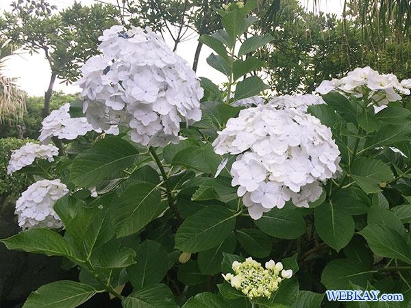 花 三宅島 夕景 miyake yukei hotel guest‐house flower