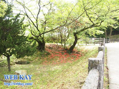 姫路城 白鷺城 世界文化遺産