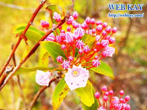 清水PA 清水パーキングエリア(上り線) NEOPASA(ネオパーサ) 花