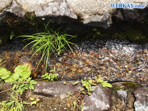 世界遺産 富山県 きれいな水
