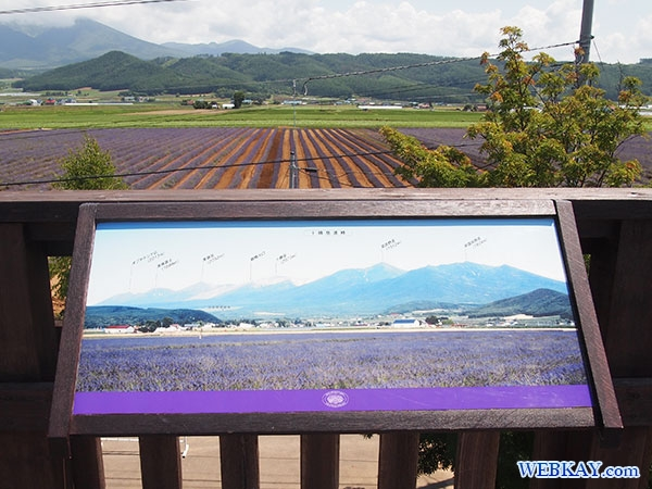 展望デッキ ファーム富田 ラベンダーイースト lavender east farm tomita ファームとみた lavender field