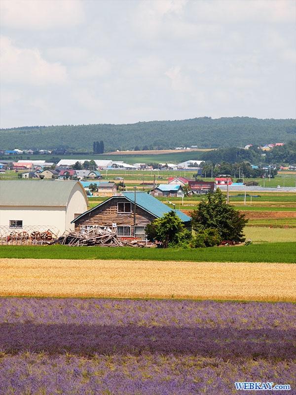 ファーム富田 ラベンダーイースト lavender east farm tomita ファームとみた lavender field