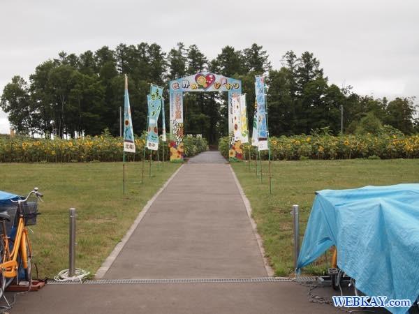 世界のヒマワリ ヒマワリ畑 ひまわり畑 Sunflower field ひまわりの里 北竜町 北海道