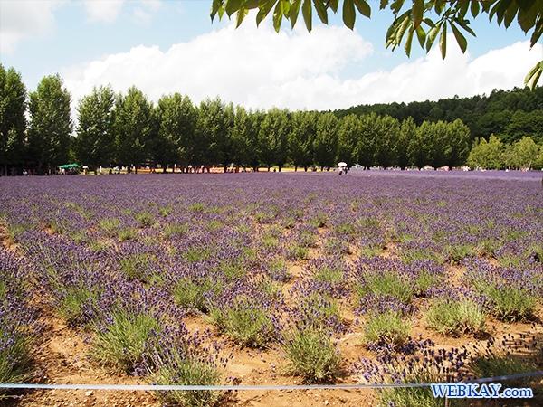 ファーム富田 ファームとみた ラベンダー畑 farm tomita lavender