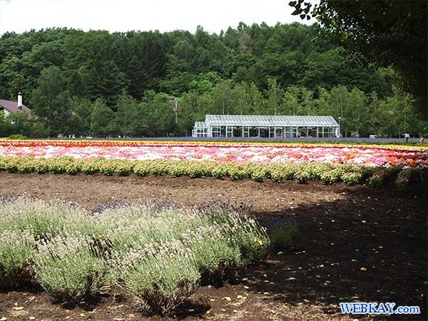 グリーンハウス ファーム富田 ファームとみた ラベンダー畑 farm tomita lavender