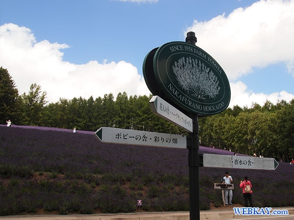 ファーム富田 ファームとみた ラベンダー畑 富良野 トラディショナルラベンダー畑 traditional lavender field furano