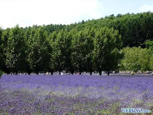 ラベンダーソフトクリーム ファーム富田 ポプリの舎 とみた farm tomita lavender ice cream
