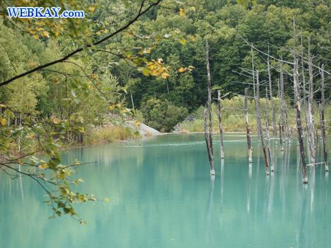 美瑛 青い池 観光 スポット