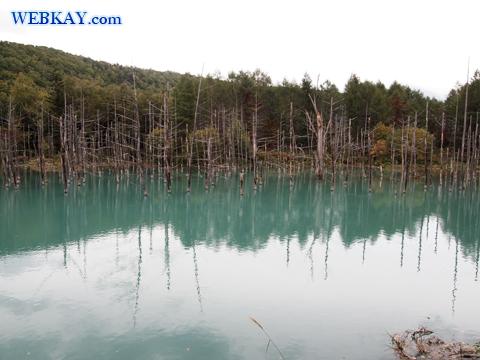 美瑛 青い池 観光 スポット Blue Pond 写真