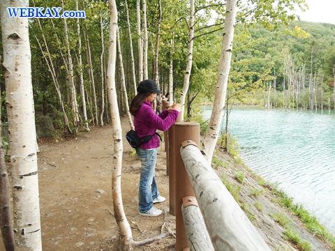 美瑛 青い池 観光 写真 スポット