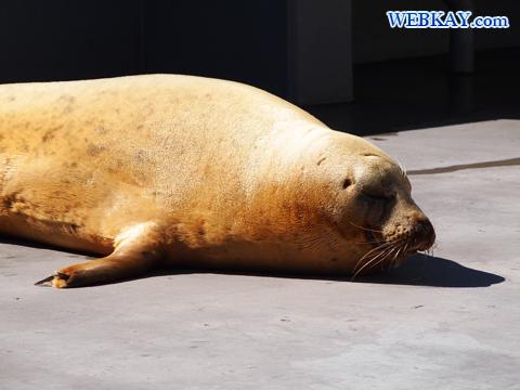 Spotted Seal あざらし館 旭山動物園 観光スポット ぶらり旅