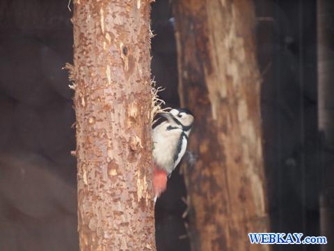 野鳥 旭山動物園 北海道産動物 観光スポット ぶらり旅