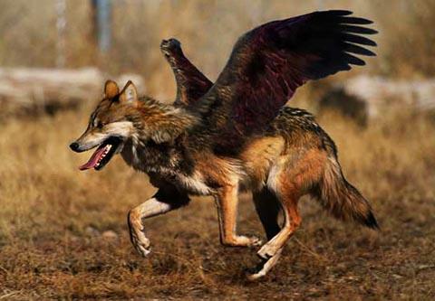フォトマニピュレーション Photomanipulation 世にも不思議な動物