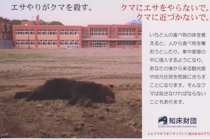 知床 野性 ヒグマ 熊 「エサやりがクマを殺す」